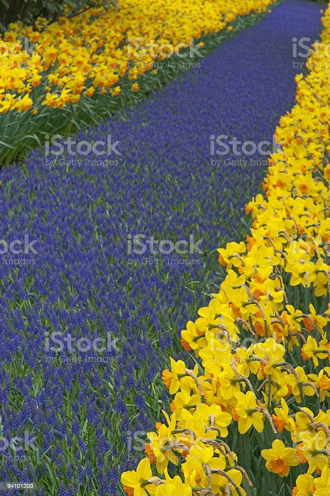 Multicolored flower-bed of narcissi and hyacinths stock photo