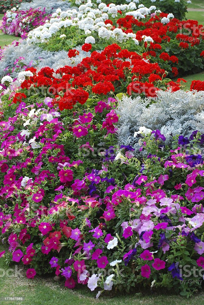 Multicolored flowerbeds in the park royalty-free stock photo