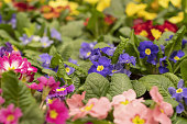 Multicolored garden flowers