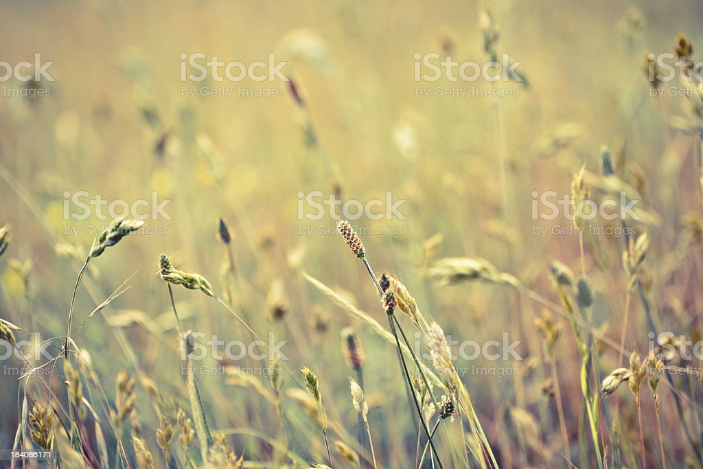 Multicolored grass background stock photo