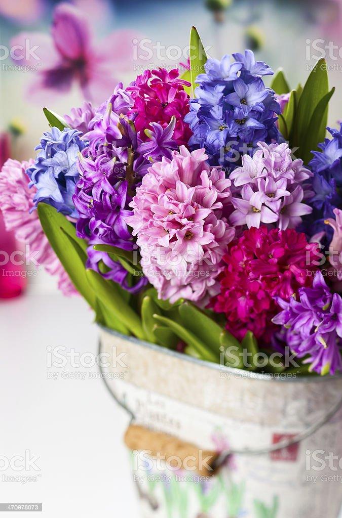 Multicolored hyacinths stock photo