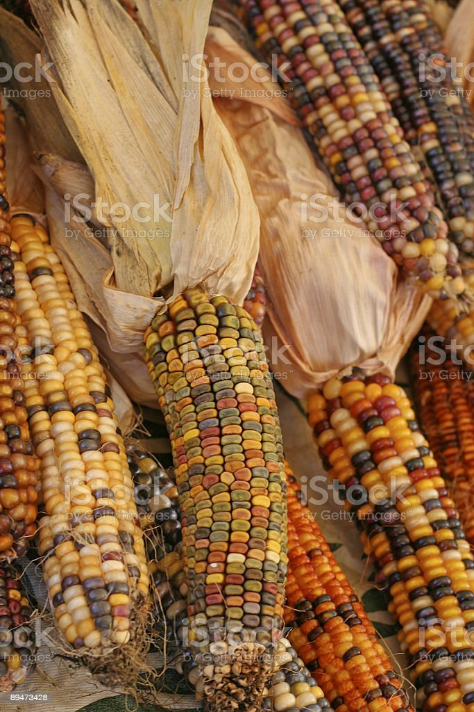 Multicolored Indian Corn at the Farmer's Market royalty-free stock photo