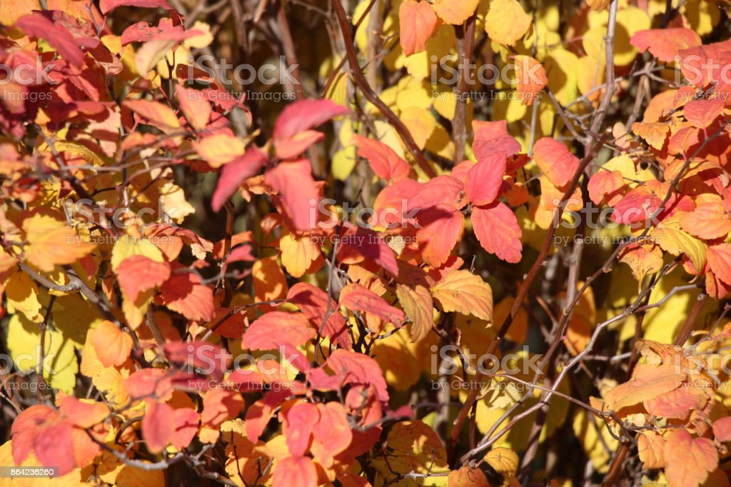 Multicolored leaves / Autumn landscape / royalty-free stock photo