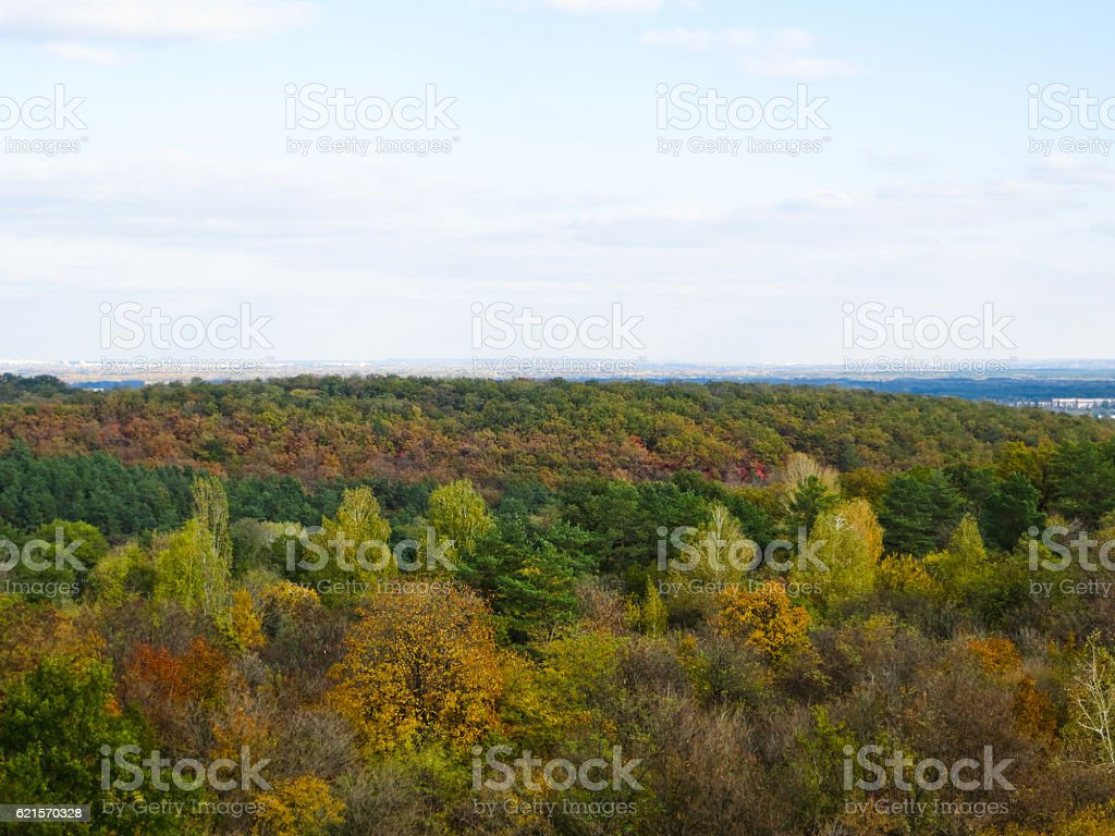 Multicolored leaves on a trees on autumn photo libre de droits