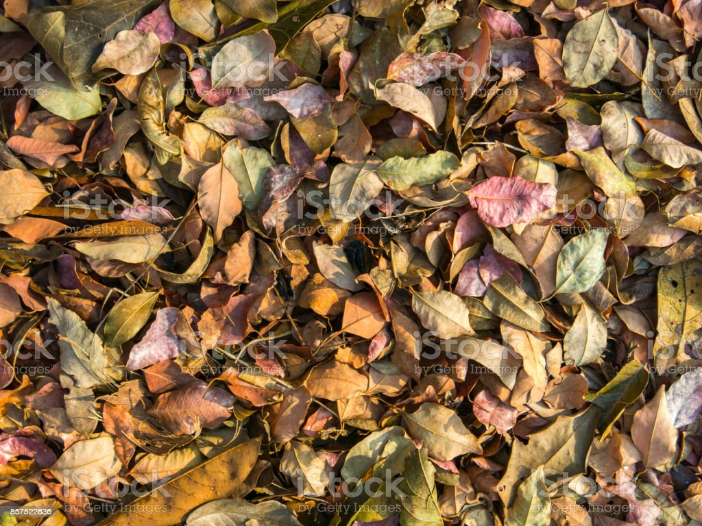 Multicolored leaves pattern stock photo