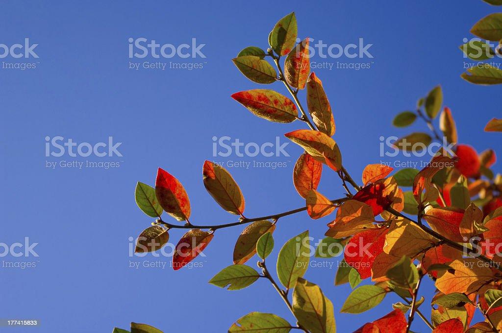 Multicolored leaves stock photo