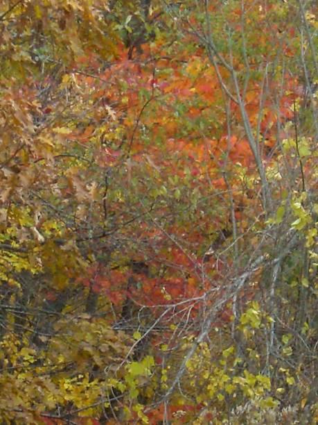 Multi-Colored Leaves stock photo