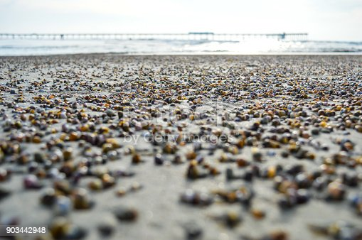Millions of multicolored, tiny mussels lay exposed on the sand during the low tide, with the ocean in the background of the shot.