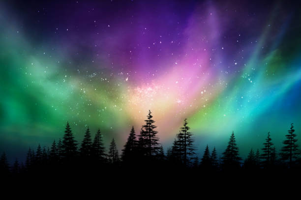 Multicolored northern lights (Aurora borealis) on Canadian forest stock photo