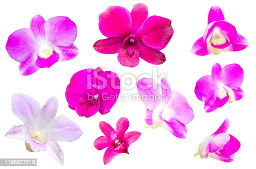 Multicolored orchid flowers isolated on a white background