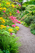 Colorful garden. Lush foliage and garden path.