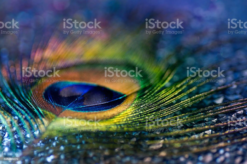 Multicolored peacock feather, bokeh light stock photo