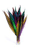 Multicolored pheasant feathers on white background