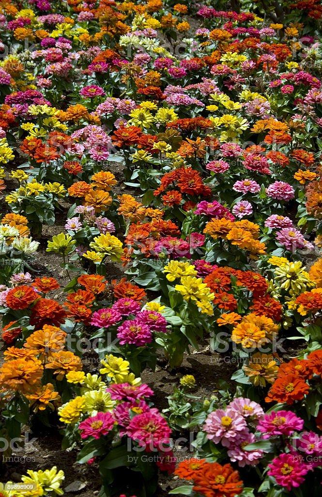 Multicolored foto de stock libre de derechos