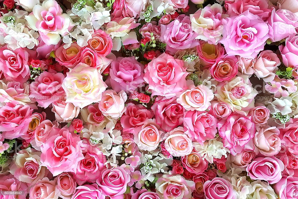 Multicolored roses background stock photo