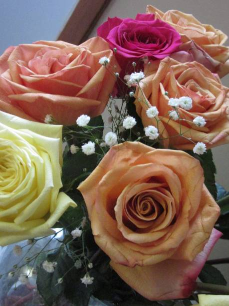 Multicolored Roses stock photo
