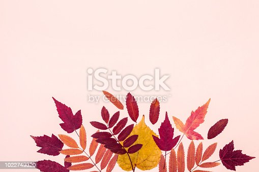 istock Multicolored set autumn leaves on pink pastel background. Hello Autumn concept 1022749320