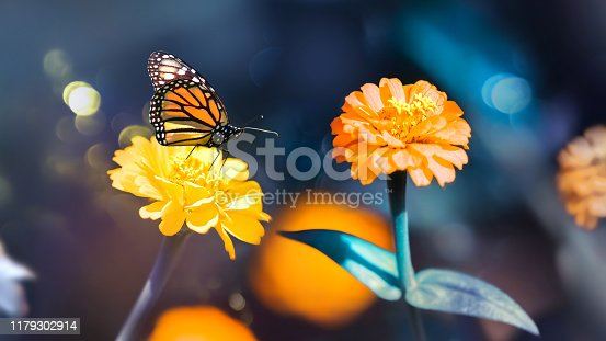 Multi-colored summer flowers and butterfly in a fairy garden. Artistic summer spring image.