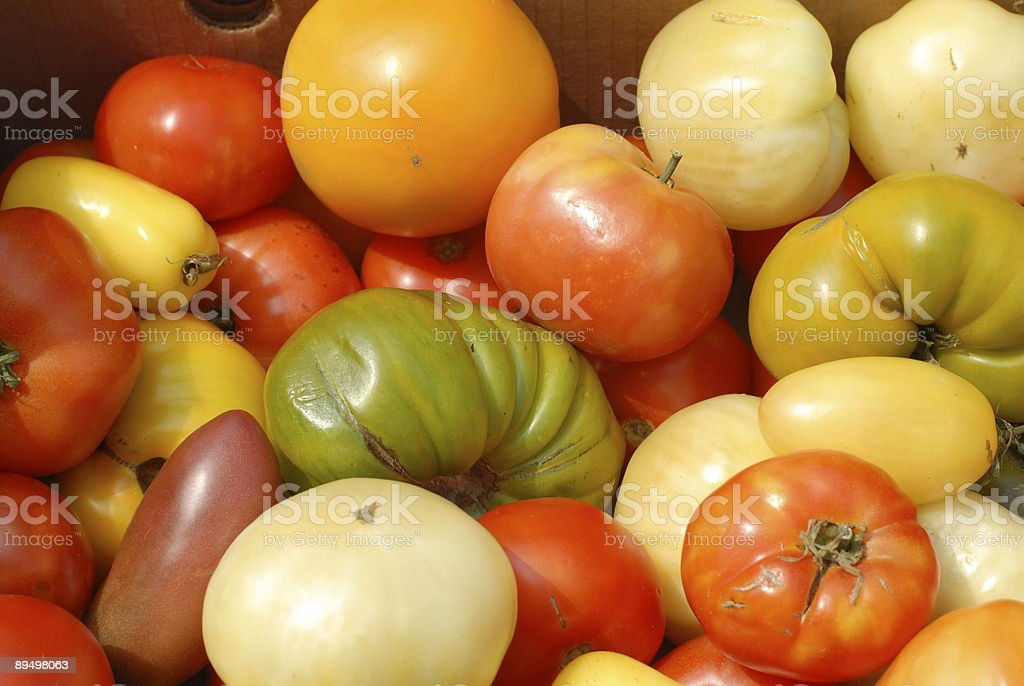 Multicolored Tomatoes at a Farmer's Market II royalty-free stock photo
