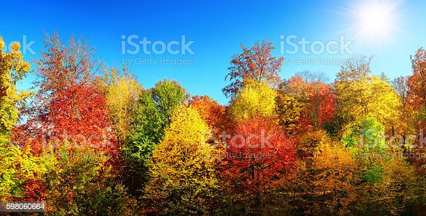 Photo of Multi-colored trees in autumn's best weather