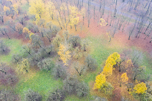 multicolored trees in foggy autumn park. aerial view