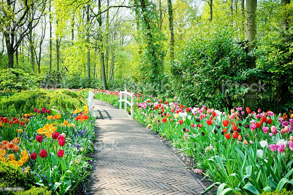 Multicolored tulips in Keukenhof Gardens royalty-free stock photo