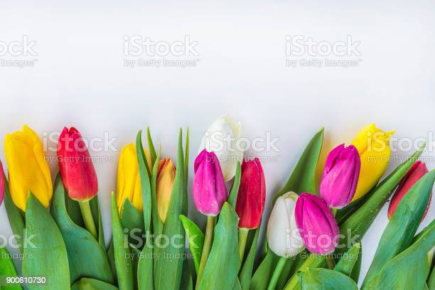 Multicolored tulips picture id900610730?b=1&k=6&m=900610730&s=612x612&h=y79czkldihgg8v7rspdmgiqc9iuj1dlyvnjfwfkaic4=