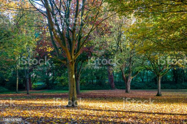 Photo of Multi-coloured Autumn trees shed their leaves on the ground in Autumn