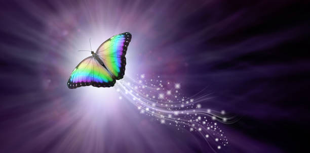 Multicoloured Butterfly taking flight into the Light a large rainbow coloured butterfly rising up with a trail of sparkles against a purple radiating background into the light with copy space reincarnation stock pictures, royalty-free photos & images