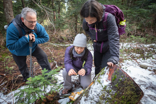 Multi-Ethnic Family Foraging for Winter Mushrooms in Snowy Forest North Vancouver, British Columbia, Canada. foraging stock pictures, royalty-free photos & images