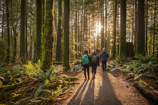 Multi-Ethnic Family Walking Along Sunlit Forest Trail, Father and Daughters