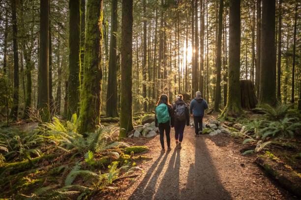 familia multiétnica caminando a lo largo de la ruta forestal iluminada por el sol, padre e hijas - excursionismo fotografías e imágenes de stock