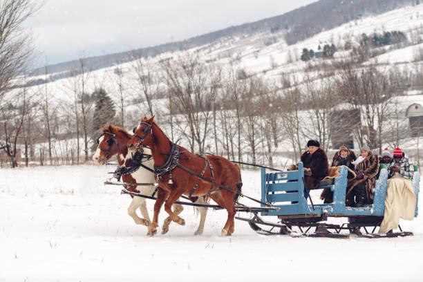 Multi-ethnic group sleigh riding Multi-ethnic group sleigh riding sleigh stock pictures, royalty-free photos & images