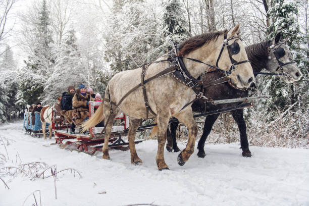 Multi-ethnic group sleigh riding stock photo
