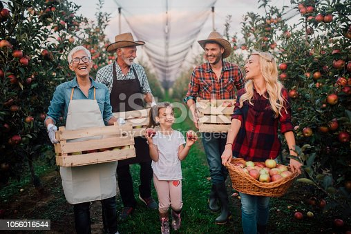 Joyful family picking up apples on the plantation of fruit