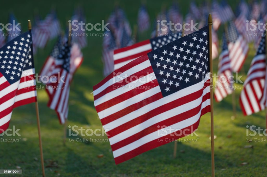 Multiple american flags on grass stock photo