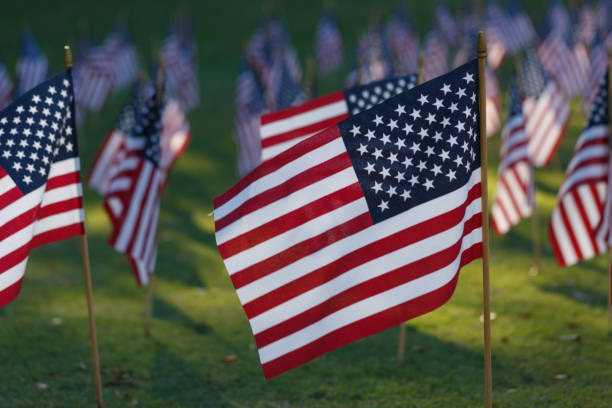 multiple american flags on grass - memorial day stock photos and pictures