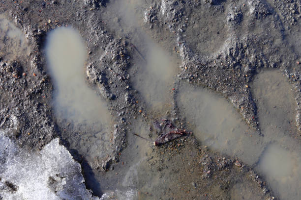 Multiple human footprints on a wet surface stock photo