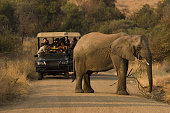 On the road in the Pilanesberg NP in South Africa.