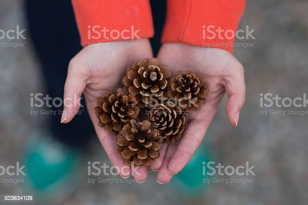 Photo of Multiple Pine Cones in Hands