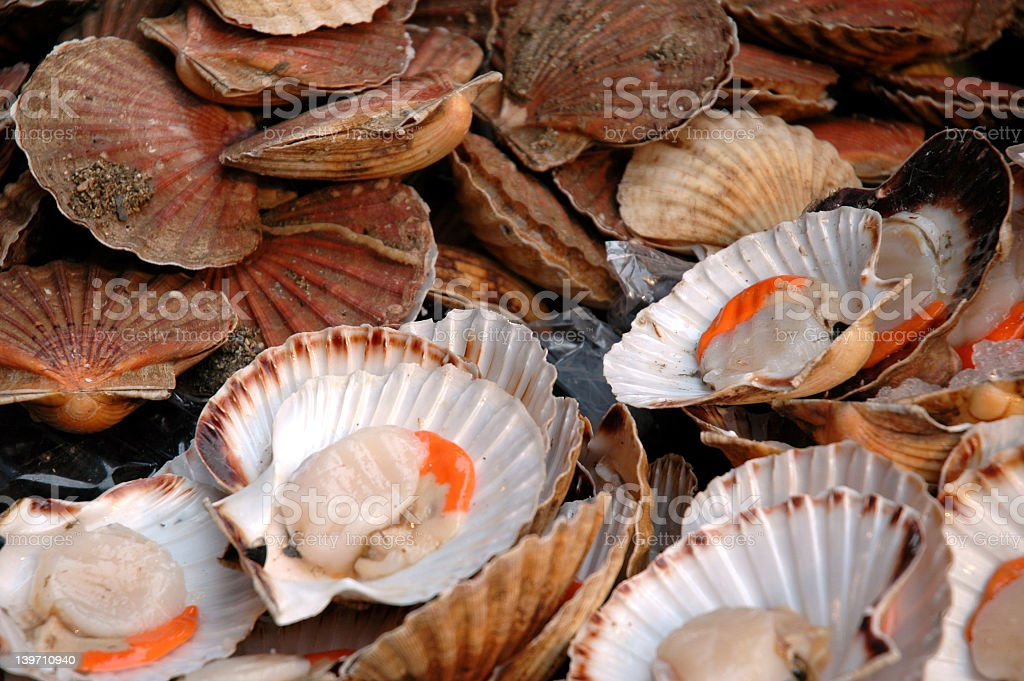 Multiple Scallops Forming A Full Background Stock Photo & More ...