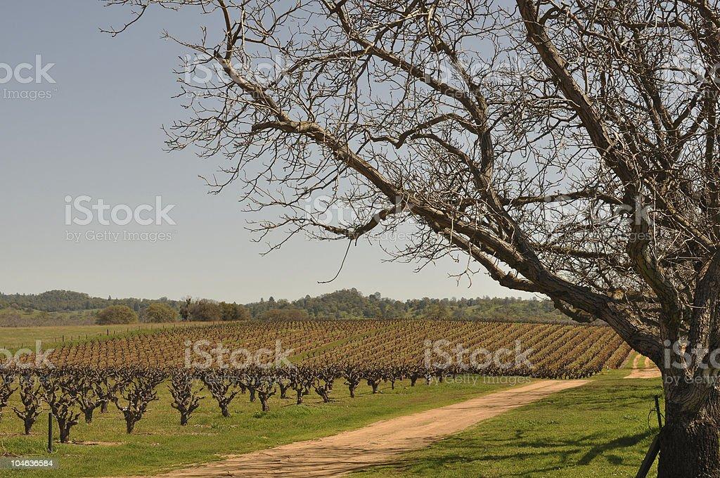Multiple Trees framing Beautiful Vineyard royalty-free stock photo
