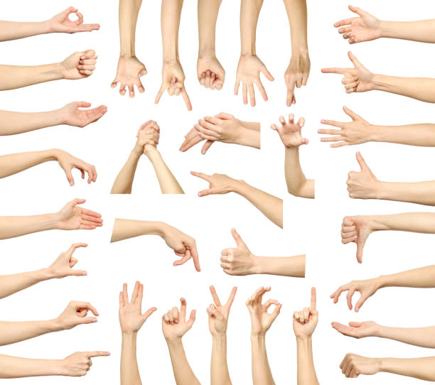 Multiple woman's hand gestures isolated on white. Big set of multiple images stock photo