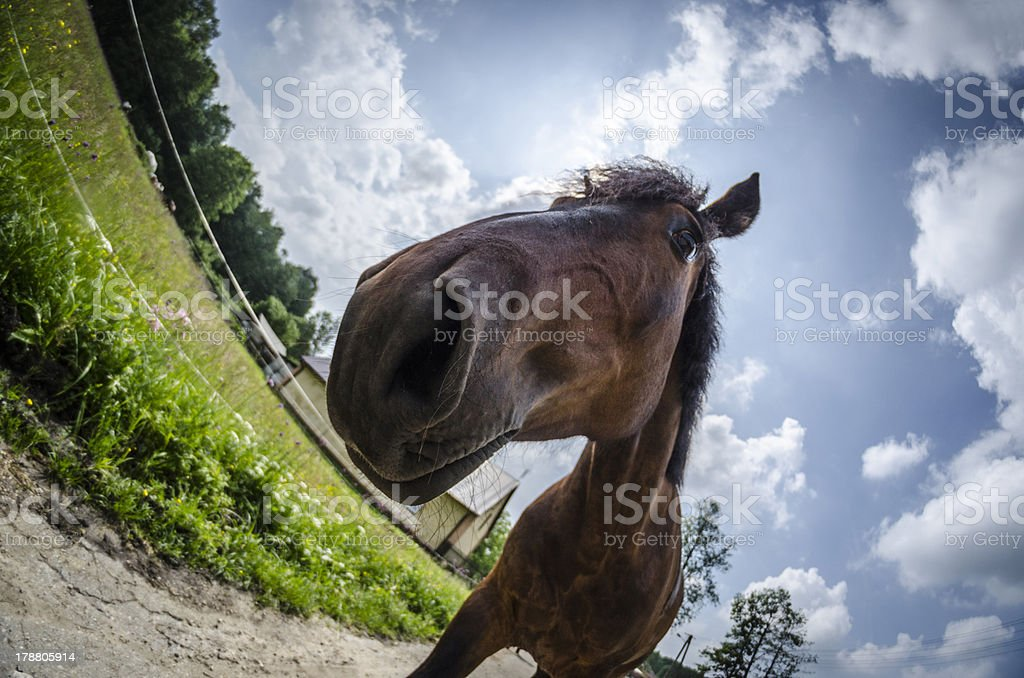 Multiracial horse royalty-free stock photo