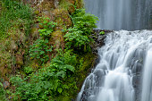 Very close view of the Multnomah Falls Near the Columbia River Gorge with the motion of the falling water as well as the windblown foliage captured as imagined