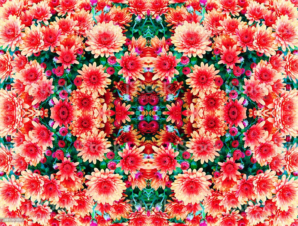 Mum flower kaleidoscope stock photo