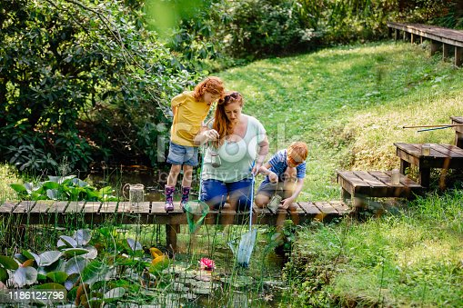 Redhead family trying to catch things from the pond with a butterfly fishing net and jam jars.  The mother is teaching her son and daughter how to use the fishing equipment.