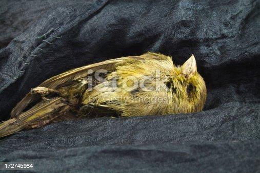 istock Mummified Bird. 172745984