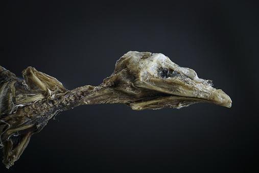 Mummified Dead Baby Bird Fallen Out Of Nest Stock Photo ...