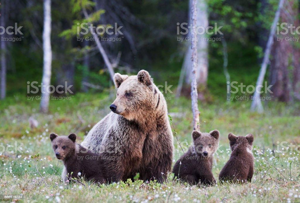 Anne ayı ve onu üç küçük kukla - Royalty-free Alaska Stok görsel